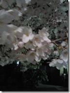 NEC_0180 桜