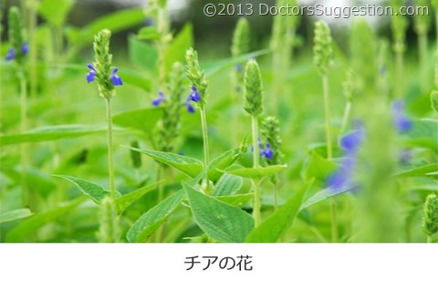チアの花|DoctorsSuggestion.com